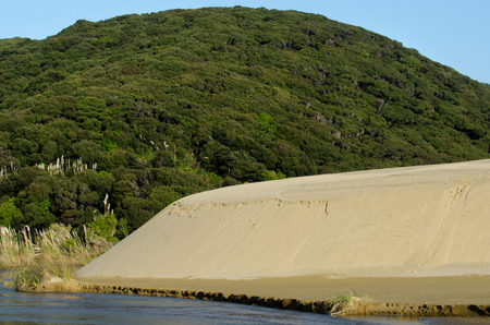 quicksand: Bush forest and Te Paki sand dunes in Northland New Zealand.
