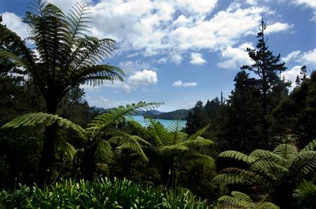 nz: Landscape of Whangaroa Harbour NZ.