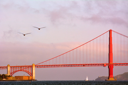san francisco golden gate bridge: Two pelicans fly over the Golden Gate Bridge in San Francisco, CA.It is one of the most iconic bridges in the world.