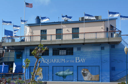 marine aquarium: SAN FRANCISCO, USA - MAY 19 2015:Aquarium of the Bay in San Francisco, California.The Aquarium is focused on local aquatic animals from the San Francisco Bay and neighboring waters. Editorial