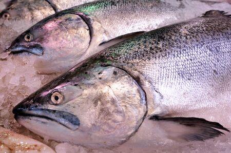 commercial fisheries: Yellowtail amberjack Kingfish (Seriola lalandi) on display in fish market.Food background texture.