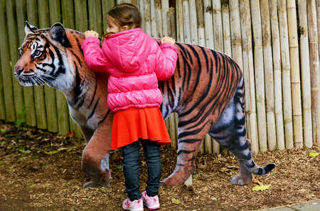 sumatran: HAMILTON, NZL - JUNE 09 2015:Little girl (Talya Ben-Ari age 05) petting a cutout of Sumatran Tiger.Century ago 100,000 tigers lived in Asia forests, swamps and tundra.Today only 3,200 left in the wild