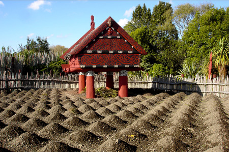 maori: HAMILTON, NZL - MAY 30 2015: Te Parapara Maori garden in Hamilton Gardens, New Zealand.Its New Zealands only traditional Maori productive garden, showcases traditional Maori cultivation knowledge