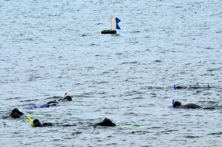 divers: Divers dive underwater.