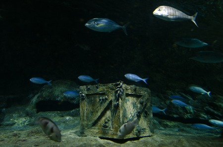 treasure trove: Underwater treasure chest box site on the sea floor.