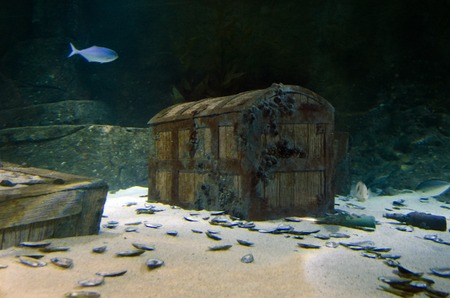 submerging: Underwater treasure chest box site on the sea floor.