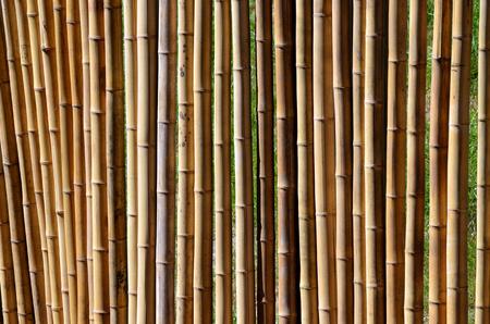 bamboo tree: Bamboo fance wall. Stock Photo