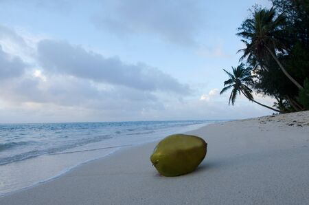 rarotonga: Coconut on a sandy beach at Muri Lagoon in Rarotonga Cook Islands during sunrise.