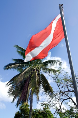 flagging: Diving flag against palm tree on a pacific island.