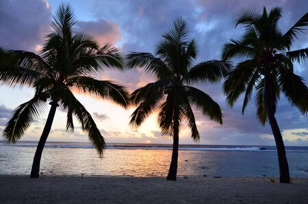 rarotonga: Silhouette of three coconut palm trees at Titikaveka beach in Rarotonga Cook Islands during sunset.