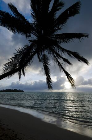 islet: Silhouette of a coconut palm tree and small coral islet at Muri Lagoon in Rarotonga Cook Islands during sunrise.