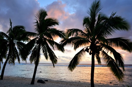 rarotonga: Silhouette of a line of coconut palm trees at Titikaveka beach in Rarotonga Cook Islands during sunset.