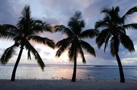 rarotonga: Silhouette of a coconut palm trees at Titikaveka beach in Rarotonga Cook Islands during sunset. Stock Photo