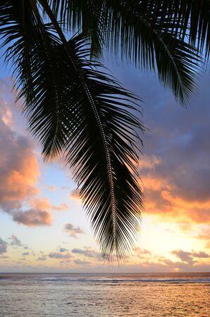 rarotonga: Silhouette di una palma di cocco in spiaggia Titikaveka in Rarotonga Isole Cook durante il tramonto. Archivio Fotografico