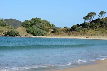 aotearoa: Landscape view of Matai Bay coastline in Karikari peninsula of Northland New Zealand.