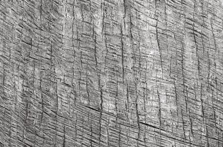 ruggedness: Palm tree trunk background texture close-up. BW Stock Photo