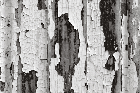 chipped: Chipped old paint background texture. (BW) Horizontal