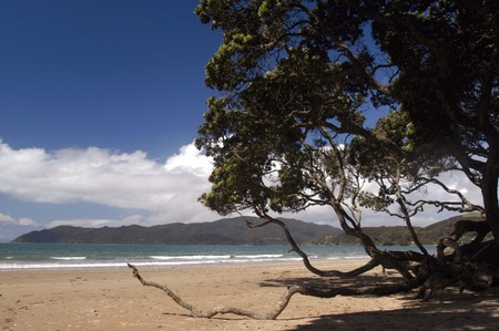 aotearoa: Coopers beach in Northland, New Zealand. Stock Photo
