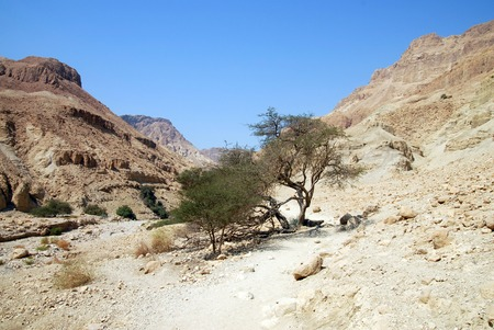 judean desert: Landscape of the Judean Desert, Israel.