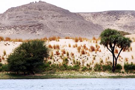 the nile: Landscape of the river Nile , Egypt. Stock Photo