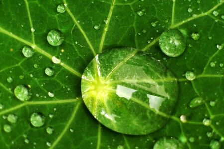 plant nature: Fresh dew drops on a leaf during the summer time.