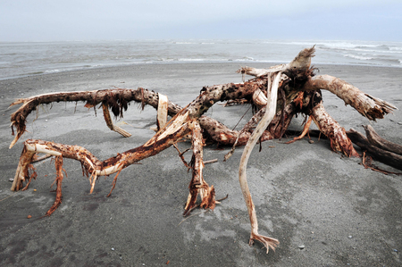 aotearoa: Driftwood on a west coast beach in southern New Zealand.