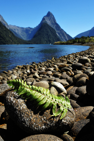 zealand: Silver fern leaves on a rock against Mitre Peak at the background in Fiordland National Park, southern Island, New Zealand. Stock Photo