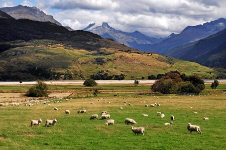south island new zealand: Farm with sheep landscape in south Island, New Zealand.