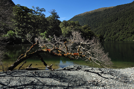 mitre: Landscape view of Fiordland National Park, southern Island, New Zealand.