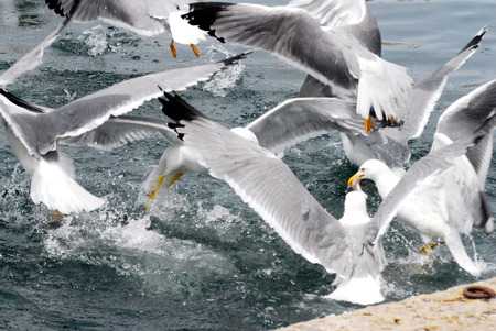 the seagulls: Seagulls in Calanques, France.