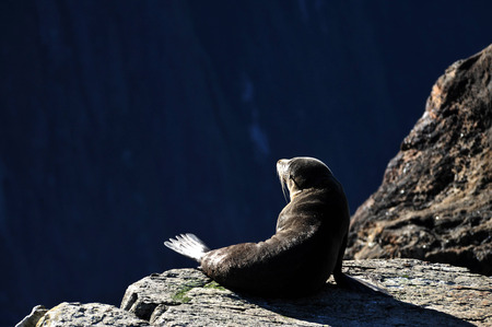 doze: Tired seals doze on rocks in the summer sun in Fiordland, southern New Zealand. Stock Photo
