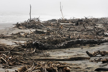 west  coast: Driftwood washed up on the rough and stormy southern West Coast of New Zealand.