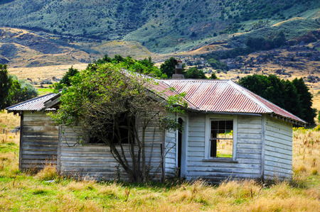 old farm: Old farm building with sheep in south Island, New Zealand.