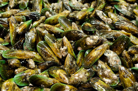 freshwater pearl: Group of New Zealand Green Lip Mussels on display in fishermen market. Close up Stock Photo