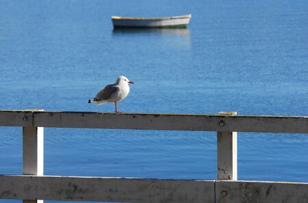 dingy: Seagull and dingy boats rest on shore of Mangonui Harbor, Northland, New Zealand. Stock Photo