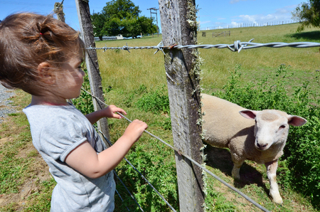 shearer: A little girl play with a lamb in a sheep farm.
