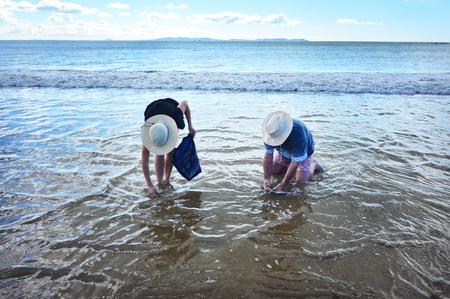 shellfish: People picks tuatua shellfish on a sandy beach in Northland New Zealand.
