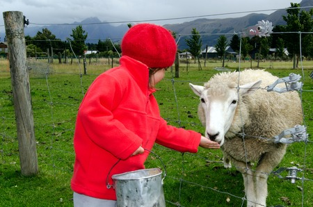 feeds: Little girl feeds sheep in the farm. Stock Photo