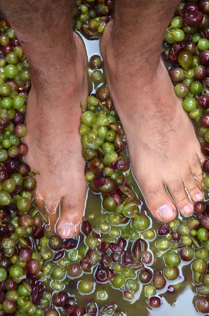 autumnn: Mans feet squash hand-picked ripe red wine grapes during wine making process.Wine concept Stock Photo