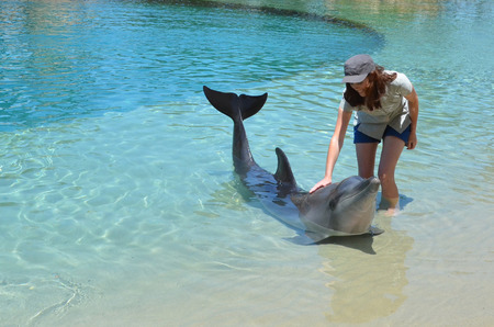 sea world: Woman interact with Dolphin in Sea World Gold Coast Australia. Stock Photo