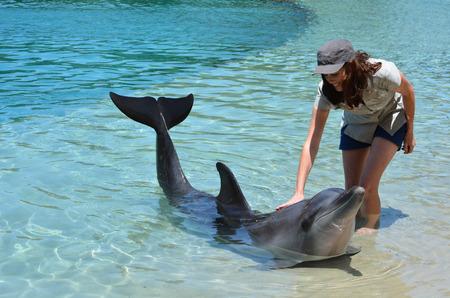 gold coast: Woman interact with Dolphin in Sea World Gold Coast Australia. Stock Photo