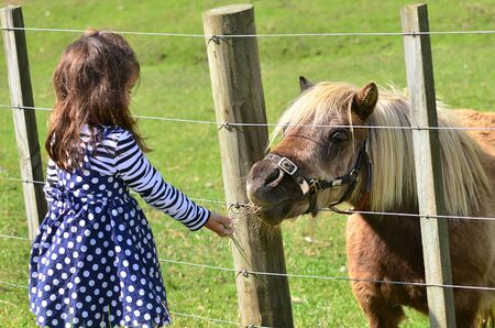 feeds: Little girl feeds brown Pony in the farm. Concept photo, childhood, animals, children. Stock Photo