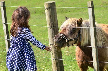 mini farm: Little girl feeds brown Pony in the farm. Concept photo, childhood, animals, children. Stock Photo