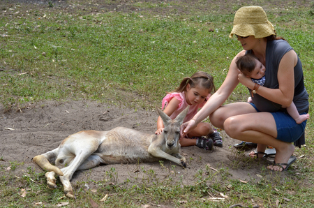 petting: Young mother with her little girl (age 04) and infant baby petting an Eastern grey kangaroo female in Gold Coast Queensland, Australia