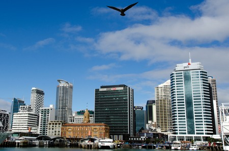 may fly: AUCKLAND,NZ - MAY 26:Seagull fly above Auckland downtown on May 26 2013.Its the largest and most populous urban area in NZ.It has 1,397,300 residents, which is 32 percent of the countrys population.