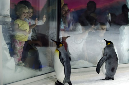 penguin colony: AUCKLAND, NZ - APRIL 26:People interact with King Penguins in Kelly Tarltons sea world on April 26 2013.Its the worlds largest Antarctic penguin colony exhibit.