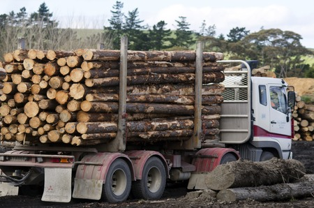 international sales: KAITAIA,NZ - JULY 30:Logging truck on July 30 2013. Its New Zealand third largest export earner with international sales in excess of $4 billion.