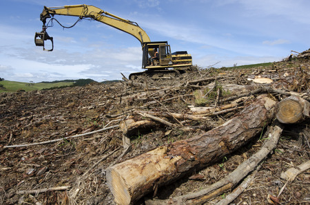 CABLE BAY, NZ - SEPTEMBER 10:Log loader driver loads logs in a forest on September 10 2013.The wood industries in NZ occupy about 17,000 people directly and more than 100,000 employed indirectly.