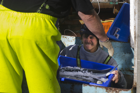 fishingboat: MANGONUI, NZ - JULY 25:Fisherman carry box full of fish on July 25 2013.NZ exclusive economic zone covers 4.1 million km2,Its the 6th largest zone in the world and 14 times the size of NZ. Editorial