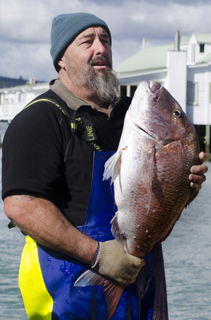 nz: MANGONUI, NZ - JULY 25:Fisherman holds very large Snapper on July 25 2013.NZ exclusive economic zone covers 4.1 million km2,Its the 6th largest zone in the world and 14 times the size of NZ.